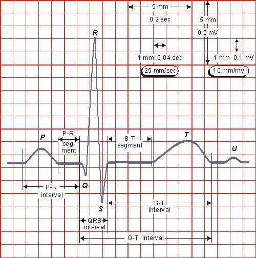 Gambar-1.-Ukuran-dan-skala-kertas-rekaman-EKG